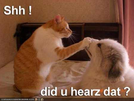 Cat holds paw on a dogs mouth. Slogan: Shh! Did u hearz that?