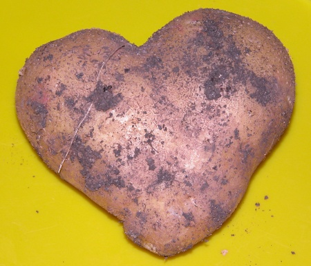 Potatoe in form of a heart.